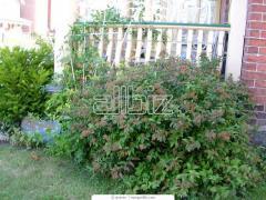 Bushes for gardening