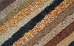 Grain, grain crops from Kazakhstan