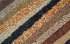 Зерно, зерновые культуры из Казахстана