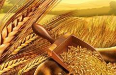 Зерновые культуры из Казахстана