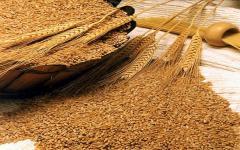 Пшеница мягких сортов 3 класса