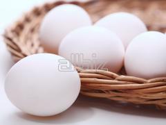 Яйца куриные от производителя