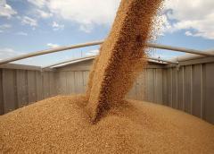 Купить пшеницу в Казахстане