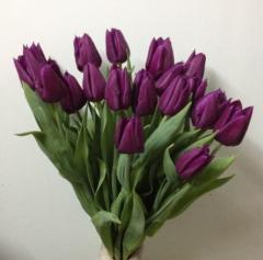 El tulipán Louvre es saturado-color lila
