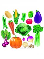 Фланелеграф Овощи 2315