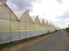 Greenhouses and hothouse complexes from 500 to 15