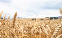 Grain in Almaty