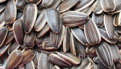 Sunflower sunflower seeds oily GOST 22391-89