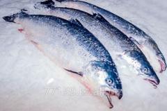 Salmon 4\5, 5\6 fresh-frozen