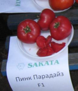 Seeds of tomatoes, Semyon of a tomato Pink