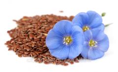 Flax for export Kazakhstan