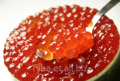 Caviar red humpback salmons (fresh catch)