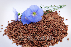 Flax for expor