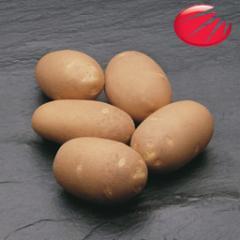 Элитные семена картофеля Голландской фирмы HZPC