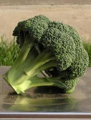 Hạt giống bắp cải xanh