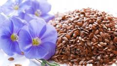 Семена льна для проращивания 1000 гр