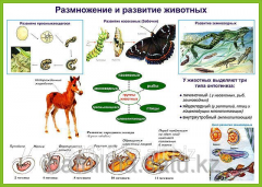 Stand Cycles of development of mushrooms, plants,