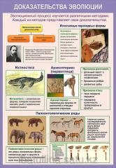 Stand Evolution of the organic world