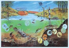 Poster Ecosystem
