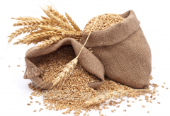 Wheat, export, is possible delivery