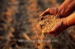 Пшеница твердая 3 кл, от 500 т