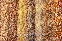 Grain for export in large lots