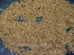Grain of oats fodder, in bulk, production of RK, 1