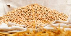 Пшеница фуражная,  2 кл.,  насыпью