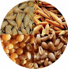 Fodder barley, in bulk