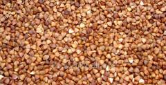 "Buckwheat ""Shortandinskaya 2"