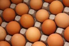 Incubatory eggs
