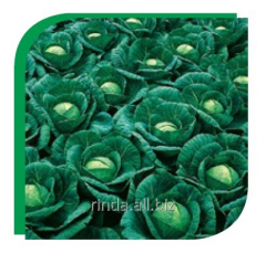 Семена капусты белокочанной среднеспелой Ринда F1