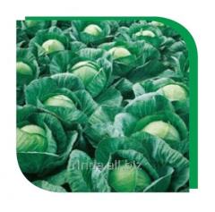 Семена капусты белокочанной среднеспелой Вестри F1