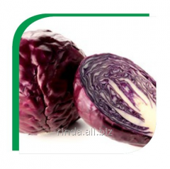 Seeds of cabbage of red Roxie