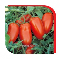 Seeds of tomatoes of F1, determinant for