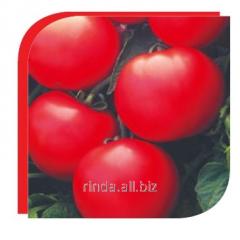 Tomato seeds determinant Debut of F1