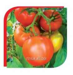 Seeds of tomato of indeterminantny Zhenaros of F1