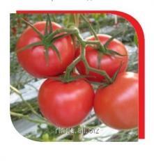 Tomato seeds indeterminantny Tomimara Mucho F1