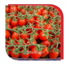 Seeds of tomato indeterminantny Dasher F1