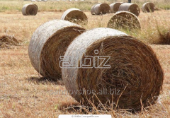 Haylage: the Sudanese, lucerne, exports