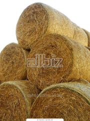 Hay: the Sudanese, lucerne, exports