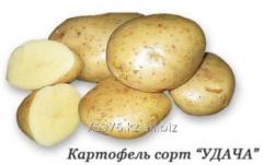 """Potatoes grade """"GOOD LUCK"""