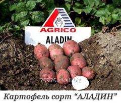 "Potatoes landing, grade of ""ALADIN"