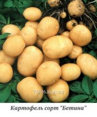 Картофель посадочный, среднеранний, сорт «Бетина»
