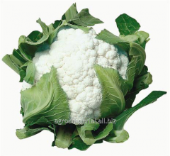 Cauliflower seeds Barcelona F1