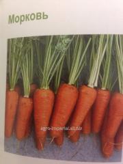 Shantone-Komet carrots seeds