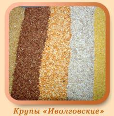 Ivolgovskiye's grain