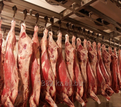Semi-carcass beef