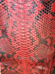 Skin python of 3,5 - 4,5 m 04