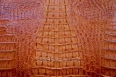 Skin of crocodile 04